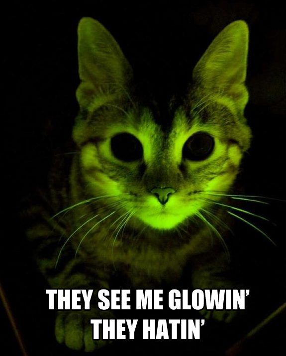 glowingcat