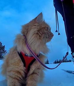 Die Katze Jesperpus geht mit ihrem Menschen Skifahren